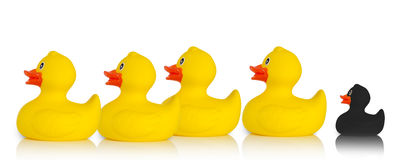 black rubber duck excluded rest smaller following behind yellow ducks white background 55310400